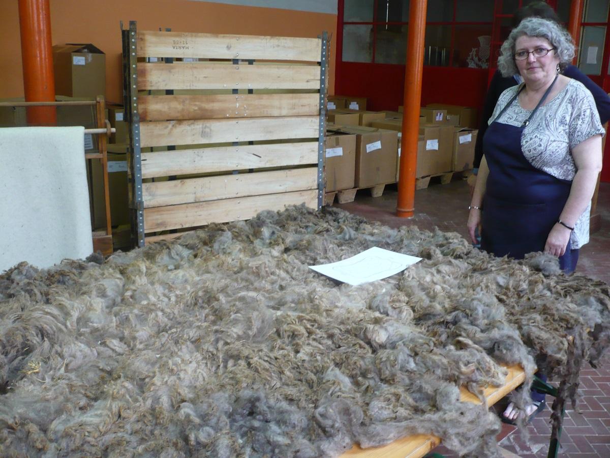 Deborah and Abruzzo sheep raw fleece - Deborah e il sucido d'Abruzzo